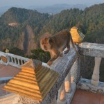 Monkey at top of Tiger Temple