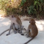Monkeys at Railay